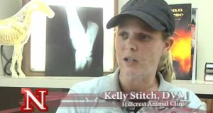 Personal-Development-in-the-Horse-Industry